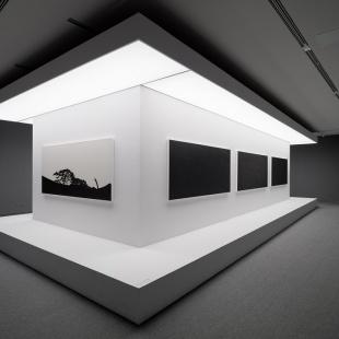 胡柳个展:黑浪